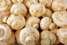 Lotes dos cogumelos Imagens de Stock Royalty Free