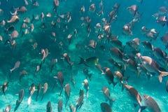 Lotes dos peixes imagens de stock