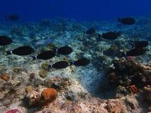 Lotes dos peixes perto do recife de corais 2 Fotografia de Stock Royalty Free