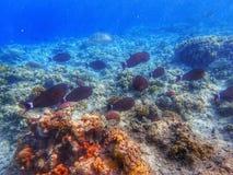 Lotes dos peixes perto do recife de corais Foto de Stock Royalty Free