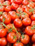 Lotes dos tomates vermelhos maduros empilhados Fotos de Stock Royalty Free