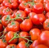 Lotes dos tomates vermelhos maduros empilhados Foto de Stock
