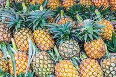 Lotes fora do ananás Fotografia de Stock Royalty Free