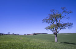 Lothian τοπίο, Σκωτία Στοκ Φωτογραφία