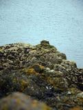 Lothian Coast. Seacoast in Lothian - region in the south of Scotland Royalty Free Stock Image