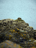 Lothian-Küste Lizenzfreies Stockbild