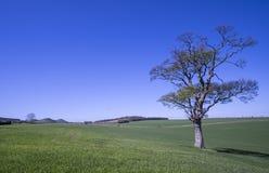 Lothian landscape, Scotland. Lone tree in beautiful countryside landscape in East Lothain, Scotland Stock Photography