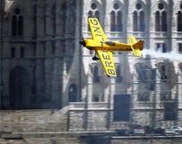 lotnicza byka rasy czerwień Fotografia Stock