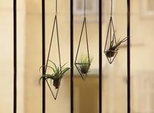 Lotnicza roślina na windowsill obraz stock
