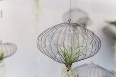 Lotnicze rośliny w sieci fotografia stock