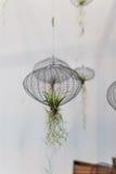 Lotnicze rośliny w sieci zdjęcia royalty free