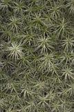 Lotniczej rośliny tło Zdjęcia Royalty Free