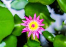 loto Fotografie Stock