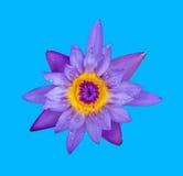 Loto azul en fondo Fotografía de archivo libre de regalías