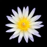 Loto blanco aislado Imagenes de archivo
