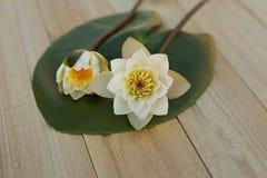 Loto blanco dos en una hoja verde Escogido recientemente Composición de la flor En fondo de madera imagen de archivo libre de regalías