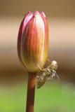 loto con el insecto Imágenes de archivo libres de regalías