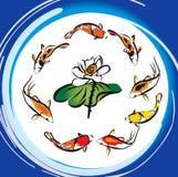 Loto dei pesci di Koi Immagine Stock