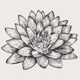 Loto, elemento di disegno floreale, Fotografie Stock
