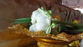 Loto floreciente doblado de la adoración Fotografía de archivo libre de regalías