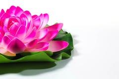 Loto kwiat Obrazy Stock