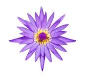 Loto natural y abejas violetas aislados en el fondo blanco con imágenes de archivo libres de regalías