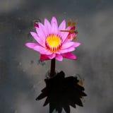 Loto púrpura con la libélula Foto de archivo libre de regalías