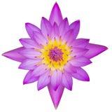 loto púrpura de la visión superior aislado en el fondo blanco con la trayectoria de recortes imagen de archivo