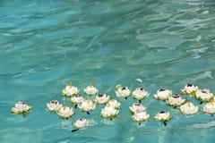 Loto que flota en el agua Fotos de archivo