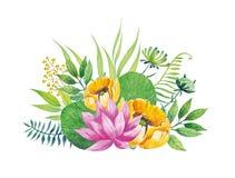 Loto rosado Flor de la acuarela con los elementos florales en el fondo blanco Ilustración del vector Imagenes de archivo