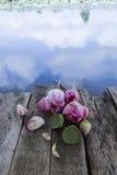 Loto sagrado o flores de loto y loto Foto de archivo libre de regalías