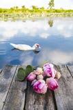 Loto sagrado o flores de loto y vaina del loto en de madera en frente Imagen de archivo