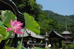 Loto, templo del verano Foto de archivo libre de regalías