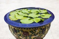 Loto verde de la hoja en tarro esmaltado del agua con los modelos del dragón imagenes de archivo