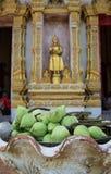 Loto verde del brote con el fondo de la estatua de Buda Fotografía de archivo libre de regalías