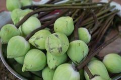 Loto verde del brote, flor del budista Fotografía de archivo libre de regalías