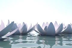 Lotobloemen van Zen in water Stock Afbeeldingen