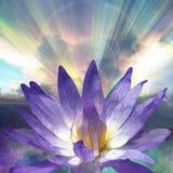 lotos światła Zdjęcie Royalty Free