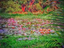 lotos stockbild