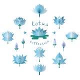 Lotos azules fijados Imagen de archivo
