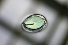 Lotos-Blatt auf Wasser Stockfoto