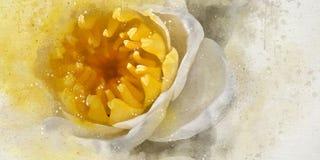 Lotos do branco da aquarela Imagem de Stock