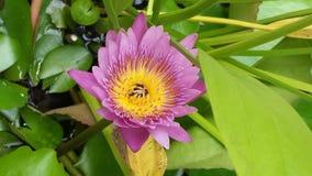 Lotos mit Blumen Lizenzfreies Stockbild