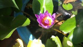 Lotos mit Blumen Lizenzfreie Stockbilder