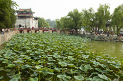 Lotos plants in Summer Palace, Beijing Royalty Free Stock Photography