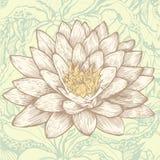 Lotos- und Auszugsblumenhintergrund Stockfoto