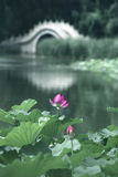 Lotos und Brücke Stockfotos