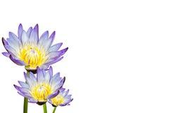 Lotosblume getrennt auf weißem Hintergrund Stockfotografie