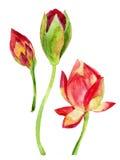 Lotosblume Zenabbildung watercolor Lizenzfreies Stockfoto
