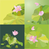 Lotosblumenhintergrund Stockfotos